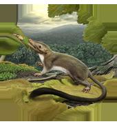 mammal-render-popup_280