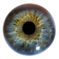 Iris_Eye_Macro_Stock_by_zpyder